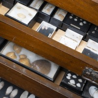 Photograph of several drawers containing shells
