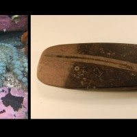 On the left is a photograph of a spinyy starfish, and on the right a fossil crinoid
